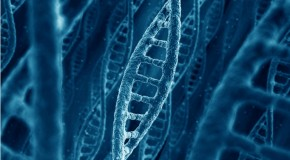 Turning DNA into a living Re-writable Flash Drive